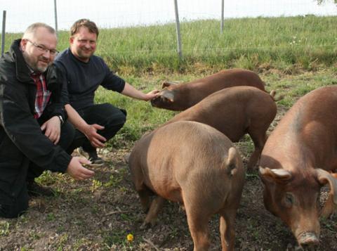 Ein Schweineleben nach Maß